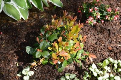 wintergreen and fuchsia